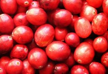 Relishing in Cranberry Biology
